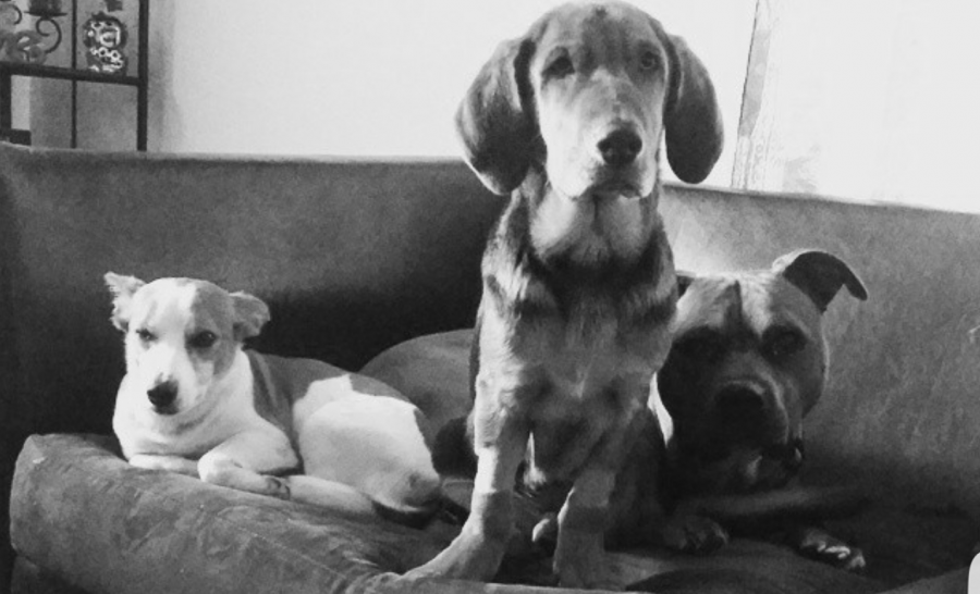 Jax, Copper, and Fezz are the authors three best friends.