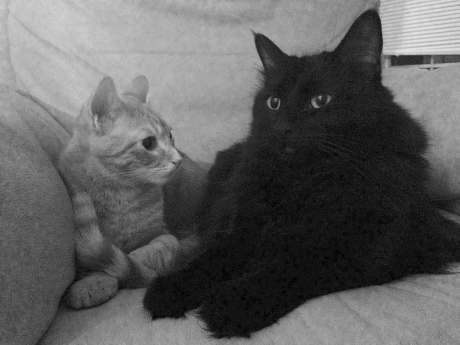 DeVoss two cats: Rodeo (right) and Kitty (left) love to cuddle all day long.